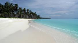 Thumbnail image for ¿Sabías que la arena blanca de playa son excrementos de pez?