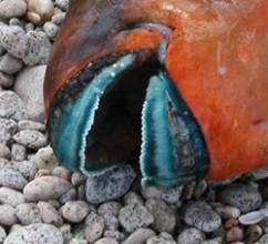 Parrot Fish Beak Mouth