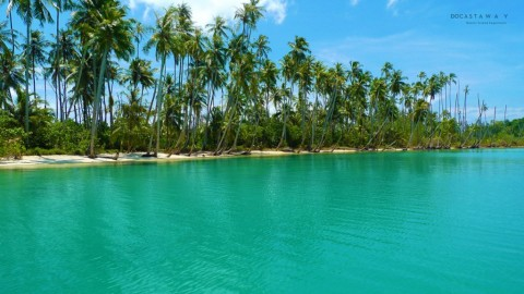 Playa llena de palmeras