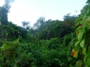 La jungla de esta isla desierta es completamente virgen y casi impenetrable