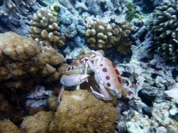 Surprising marine life at Robertson´s desert island