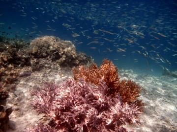 Sorprendente vida submarina en la isla desierta de Ian