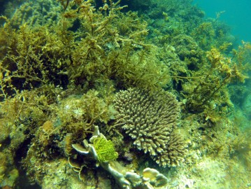 Coral reefs in front of the beach