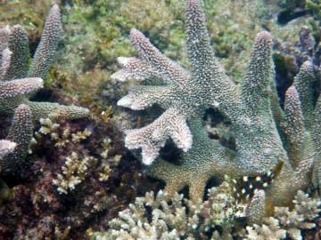 Surprising marine life at Ian´s desert island