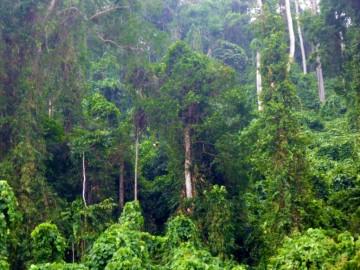 Selva virgen e impenetrable en la isla