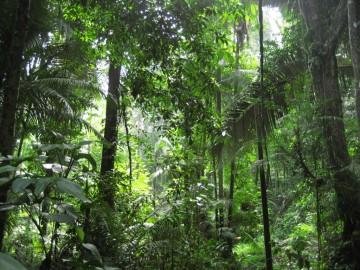 Virgin and impenetrable jungle at Siroktabe