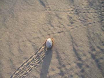 Y como en cada isla desierta, la playa se llena de pequeños animales cuando hay comida cerca