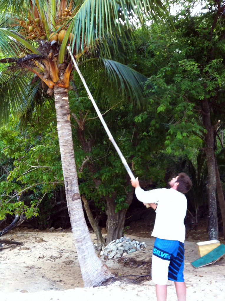 Terence collecting coconuts