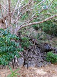 Rocks and jungle at Marooning