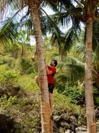 Franck improved his palmtree climbing skills!