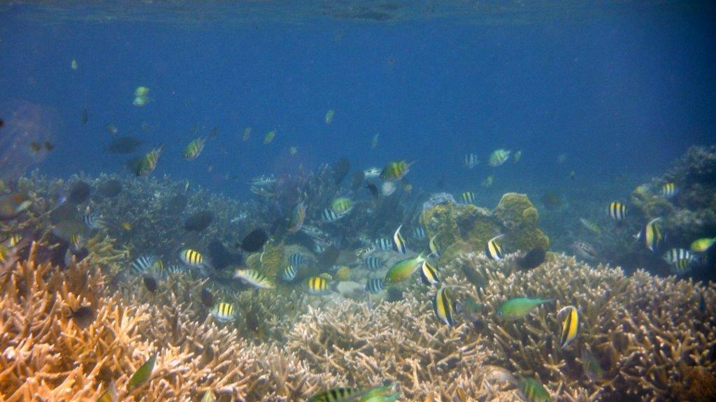 They enjoyed the wonderful marine life there