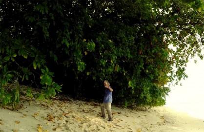 Ian Stuart survivor deserted island