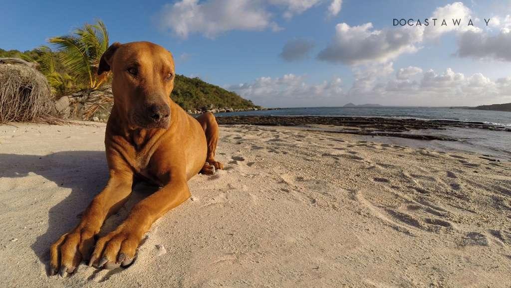 Quasimodo quassi castaway dog