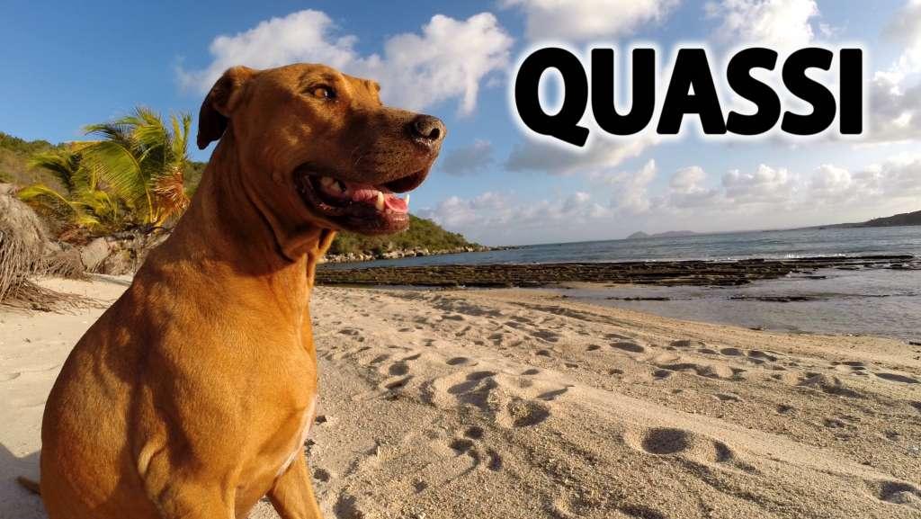 Quasimodo, the castaway dog in Australia