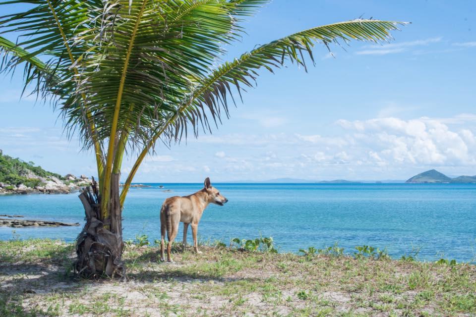 David Glasheen Robinson Castaway Australian Dog