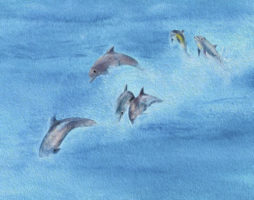Dolphins jumped around them